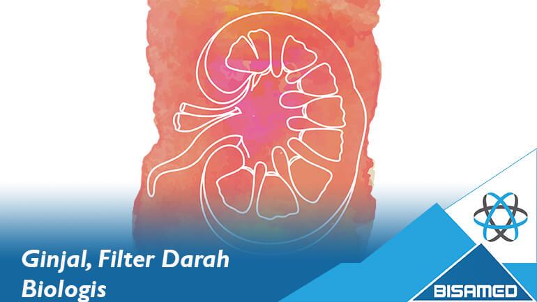 Ginjal, Filter Darah Biologis